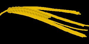 Пшеничная каша, польза и вред, как варить