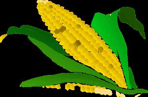 Польза кукурузной каши на воде