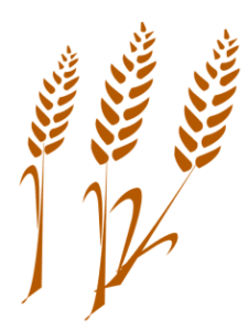 Польза пшеничной каши на молоке