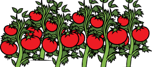 Чем полезен томатный сок для беременных