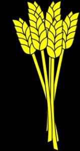 Чем полезна пшеничная каша на воде